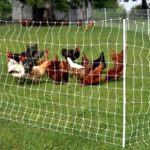 6 factors before u begin a chicken house