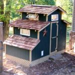 Are you contemplating raising chickens? – my chicken coops
