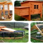 Chicken coops to construct review