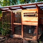 Chicken house designs for warm weather 15 dan garden coop austin chicken house tour coop ideas blog