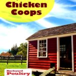 Chicken housing: all you need to learn about chicken house designs to find the best coops – countryside network