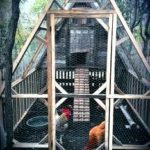 Creating a chicken house: how to prevent common problems