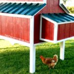 Free chicken house plans – the creative mother
