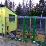 Free downeast thunder farm chicken house plans