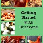 Getting began with chicken webquest