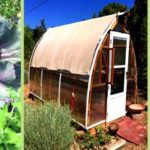 Kitchen garden & coop tour