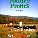 Meat chickens: what you ought to know before you decide to bring them up - the elliott homestead