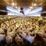 Oklahoma farm report – national chicken council urges withdrawal of gipsa interim final rule on competitive injuries