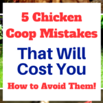 The backyard chicken house 5 mistakes that can cost you