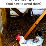 What your chicken house will include (plus...mistakes to prevent) [podcast]
