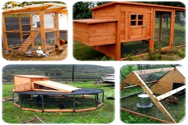Chicken coops to construct review without any experience of
