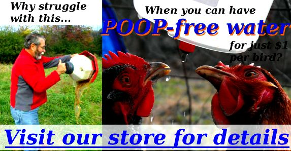 Why struggle with dirty water when you can have POOP-free water for just $1 per bird? Visit our store for details.