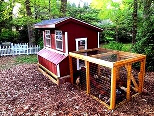 5x6 Chicken Coop with Dusk-2-Dawn Door and Chicken Run