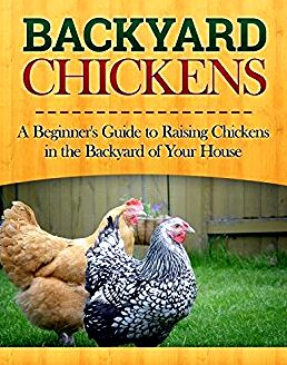A beginner's help guide to backyard chickens and stability of