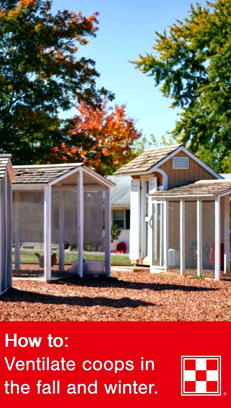 Add home windows for your chicken house for air conditioning - hobby farms By doing this, rain