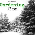 Winter Gardening. A huge curated list of everything you need for your winter gardening. Come join the fun, and get your garden in shape this winter!