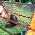 Portable Chicken Coop – What Are The Benefits