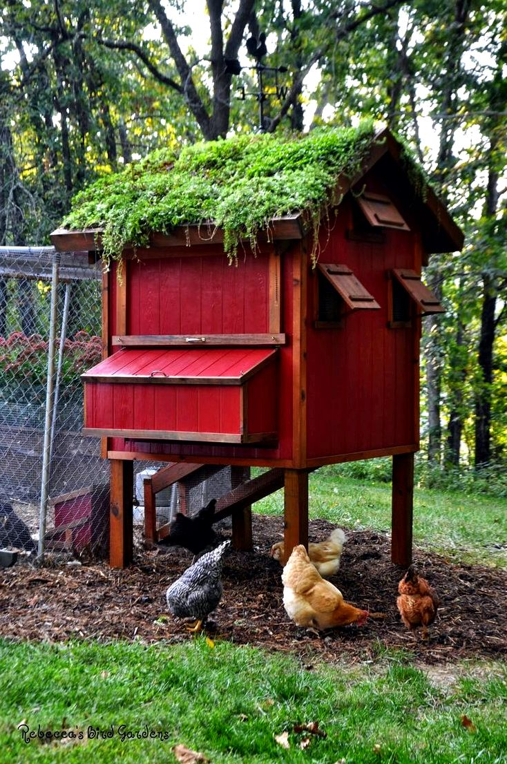 Creating a chicken house: how to prevent common problems wild birds in or from