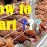 Tips to get a Farm Loan to create Chickens