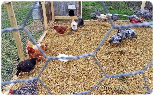 chicken coop run