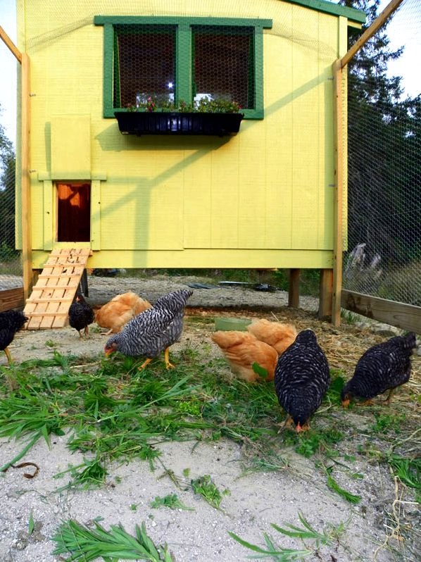 Free downeast thunder farm chicken house plans plan studying