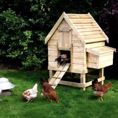 New diy chicken house – invironment – medium Still missing chicken-wire in